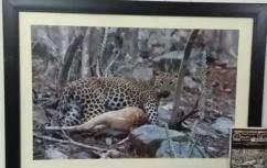 Wall hanging photo of wildlife