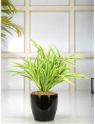 Get new style of plastic planters
