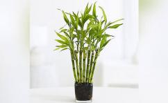 Convey your love and appreciation by sending a wishful plant