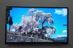 24 inch Sony panel LED TV