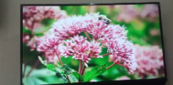 42 inch brand-new smart android LEDTVDolby sound