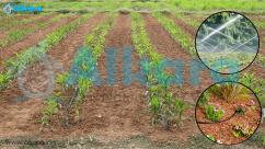 Natural water softeners for agricultural purpose inbangalore