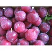 Buy Fresh Plum Online at Best Price Supple Agro Microgreens