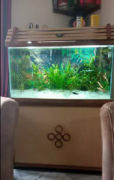 Fish aquarium 3 feet, teak polish