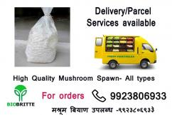 Biobritte Agro India- Mushrooms and Medicinal Mushrooms are available
