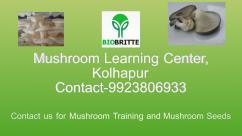 Mushroom Learning Center, Kolhapur-9923806933