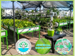 Hydroponics and Aquaponics system to grow own food  Home  garden