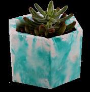 Succulent planters and pots