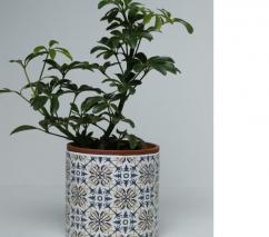 Indoor and Interior Plants, Pots