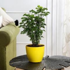 Low Maintenance Indoor Plants for Home