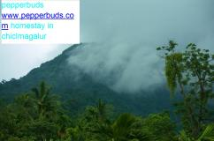 homestay in chikmagalur,www.pepperbuds.com