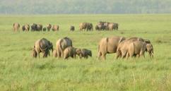 Buy India wildlife tour packages -Corbett National Park