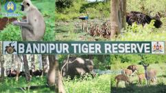 Bandhipur wildlife safari packages - Cheap And Best Hotels in Bandipur