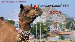 Rajasthan Tour Packages, Pushkar Camel Fair Festival 2019, Best Rajasthan Tour