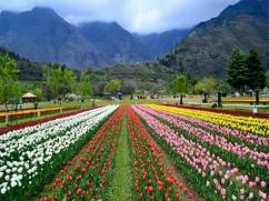 How To Get Cheapest Kashmir Tour Package For 3D/4N