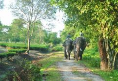 Wildlife Trip at Gorumara