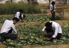 Top Agriculture College in Uttarakhand