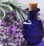 Lavender Co2 Extracts Oleoresins Supplier, Manufacturer & Exporter