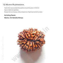 Original 12 mukhi rudraksha just Rs 5500/- from Teleone