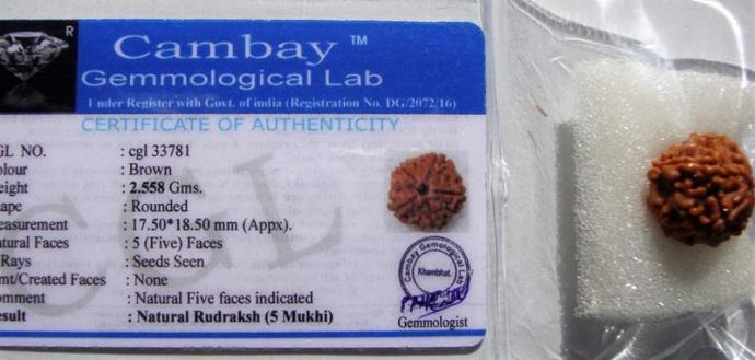 Satyamani Natural Certified /5 Mukh Rudraksh