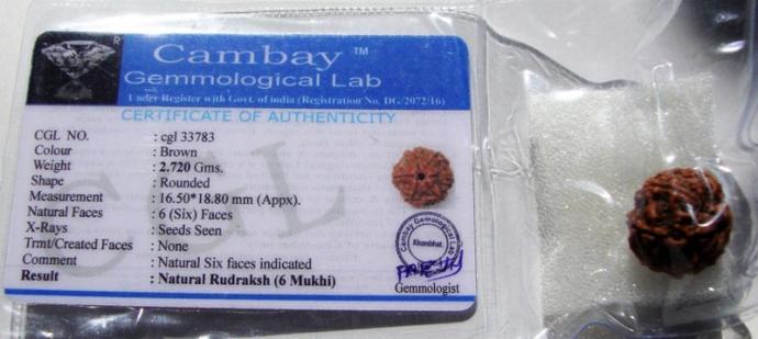 Satyamani Natural Certified /6 Mukhi Rudraksh For Venus