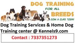 Progressive Dog Training Center in ECIL and sainikpuri
