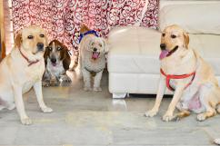 Home Base Dog Boarding, Dog Care in Gurgaon, Delhi - Happy Pettings
