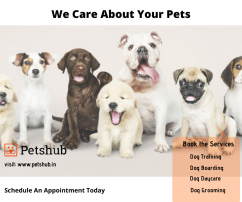 Best Dog Grooming Services in Hyderabad- Petshub