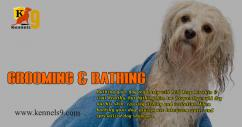 Dog Grooming, Dog Baths, Haircuts Services In ECIL