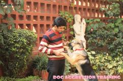 Best Pet Boarding Dog Training Grooming Services