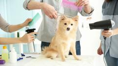 Mobile Pet Grooming in Chennai - Best Pet Grommer in Chennai