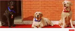 Pet Boarding Service Delhi