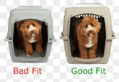 Mobile Pet Grooming care for your pets