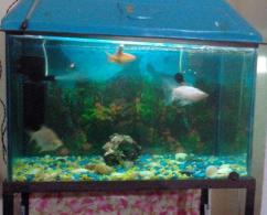 Aquarium Available In Great Condition