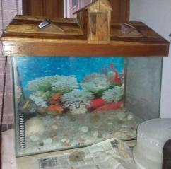 Aquarium In Ultimate Condition
