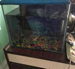 Fish Aquarium Available With Fish In Best Price