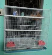 Cage For Birds Available
