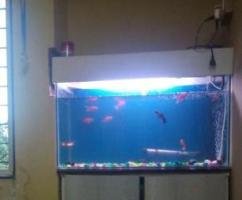 Fish Tank With Oxygen Pipe