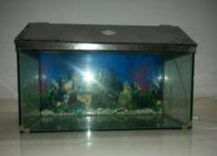 Fish Tank In Low Price