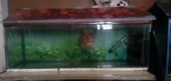 Fish Tank With Its Cover On Top