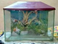 Fish Tank In Great Condition