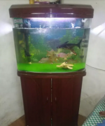 Moulded aquarium with wooden cabinet & all accessories