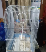 Bird cage (pinjara)