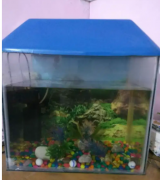 Fish aquarium with all accessories like stones, plants and filter