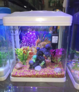 Aquatic Gallery Deals in all variety of aquariums , fishes , accessories