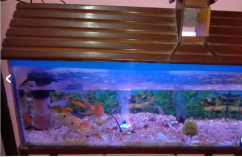 3ft Aquarium big size with all accessories and 22 colourfull fishes