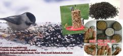 Wholesale trader of bird food - Birds for sale