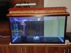 Fish Aquarium with Flower Horn Fish