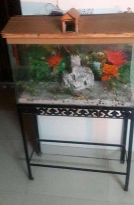 Fish aquarium... big size for sale