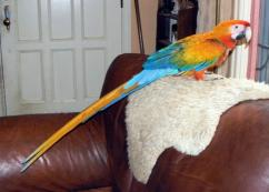PARROTS AND PARROTS EGGS FOR SALE (267)368-7695
